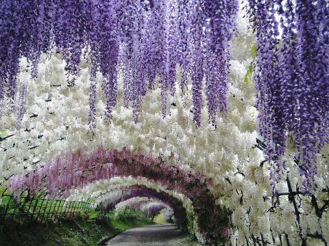 2-Kawachi Fuji Garden